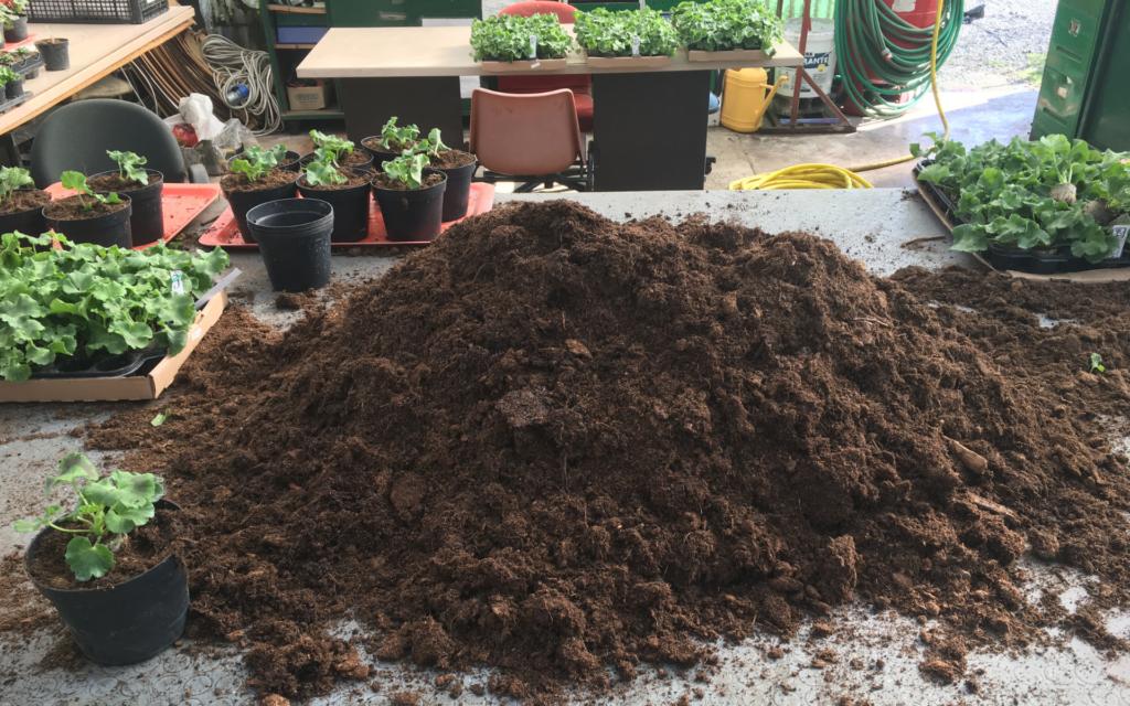 Giardino di marzo: mani nella terra!