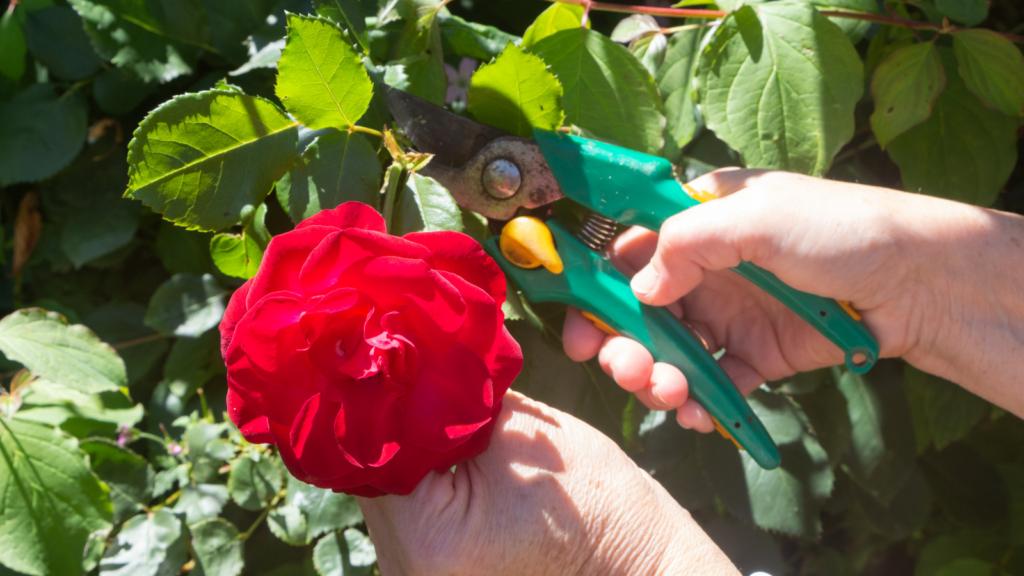 Giardino a maggio: i lavori da fare